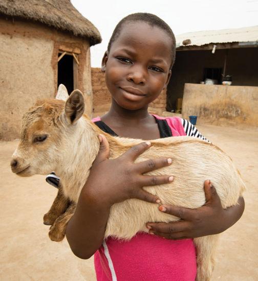 Image of Goat