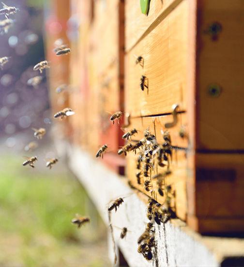 Image of Beekeeping kit